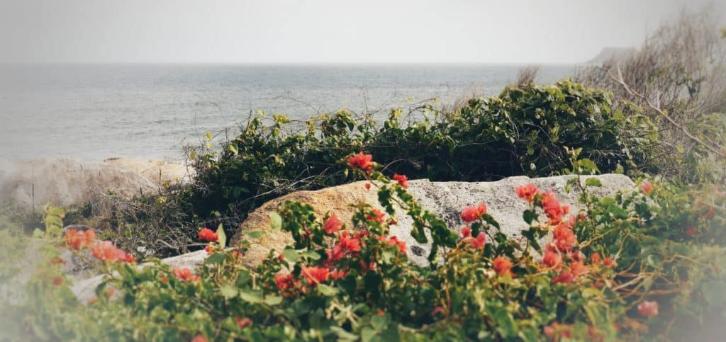 Flowers by the Ocean