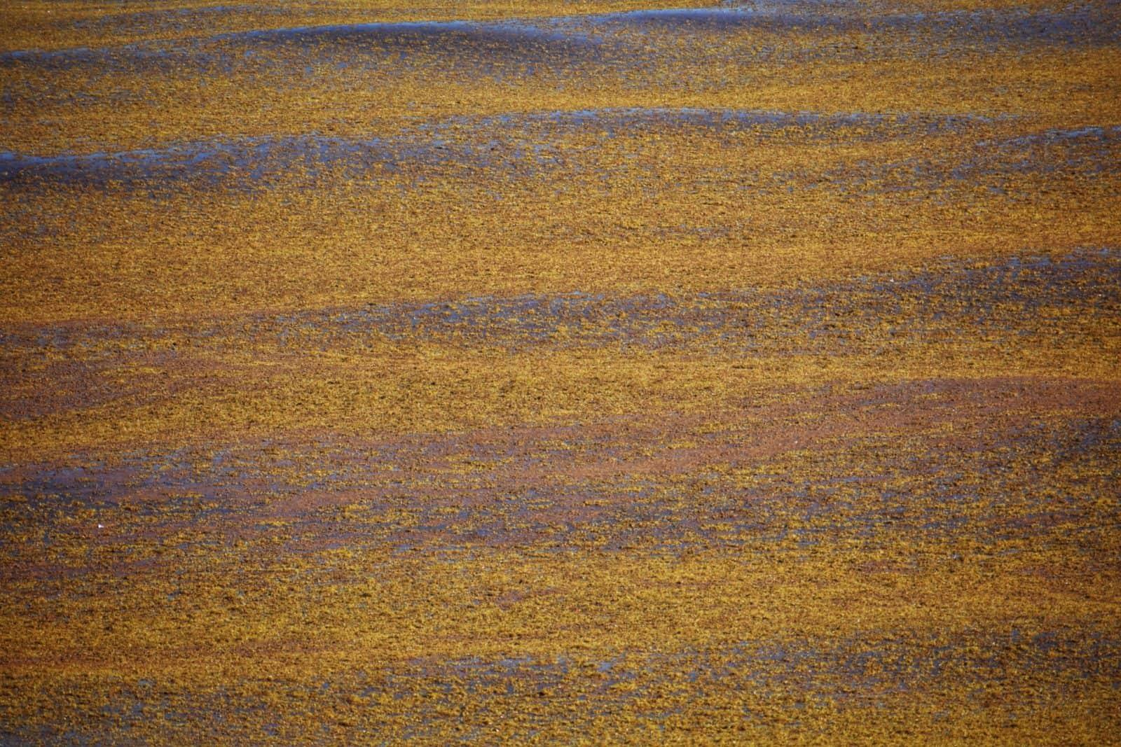 Sargassum Sea