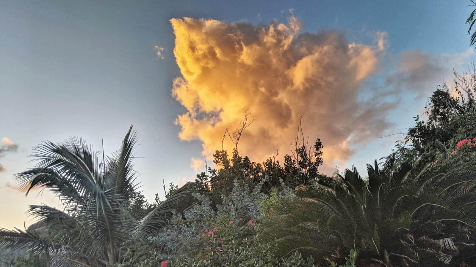 Cloudy Bush