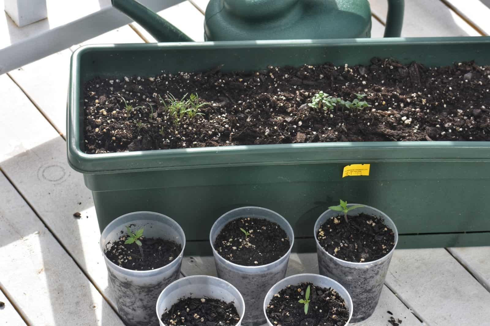 Gardening Growth